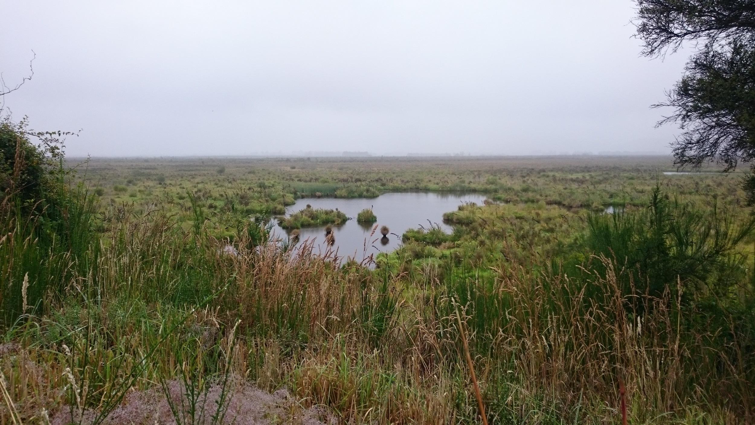Part of the Sinclair Wetlands