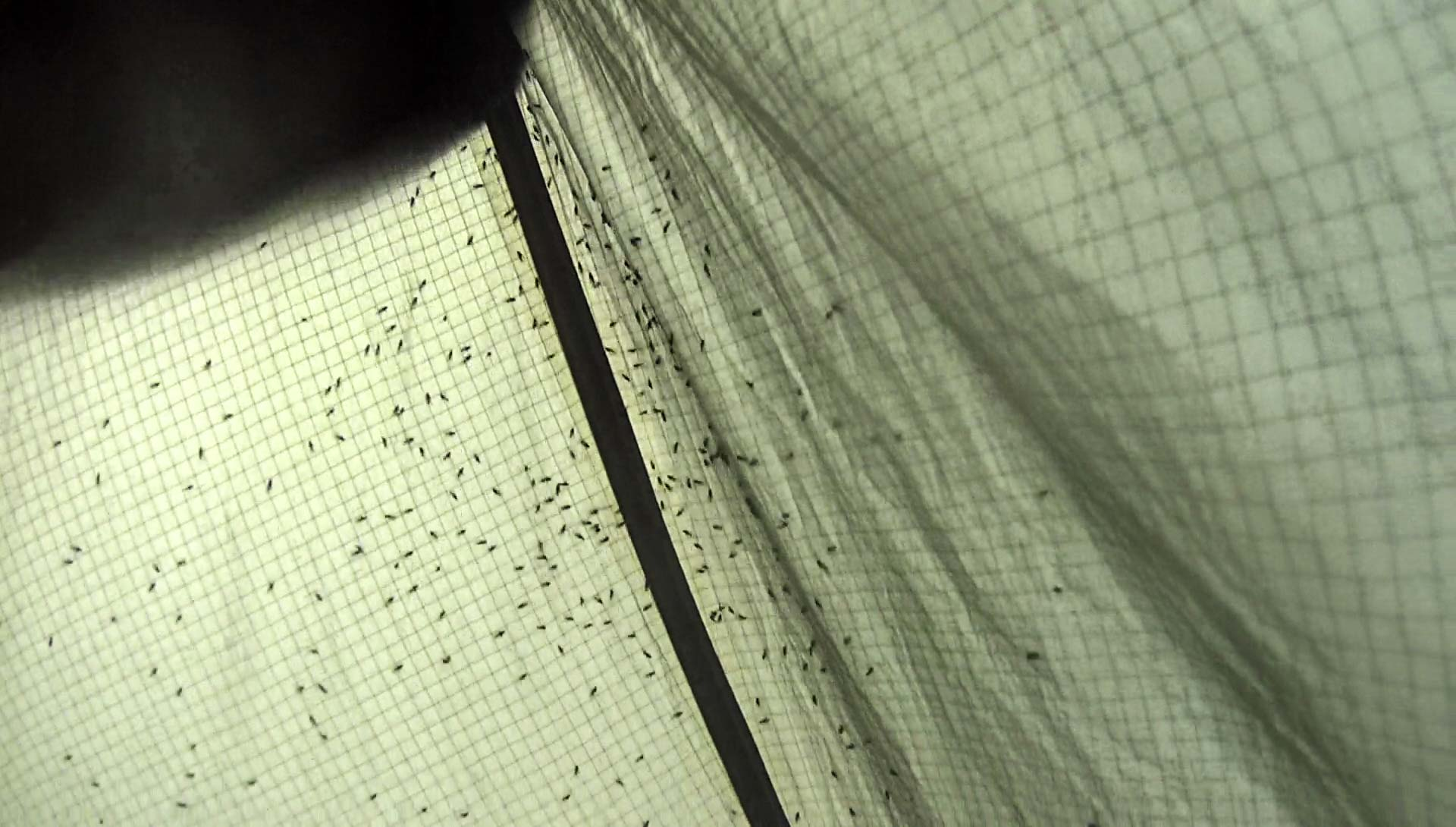 All my sandfly friends have come to visit