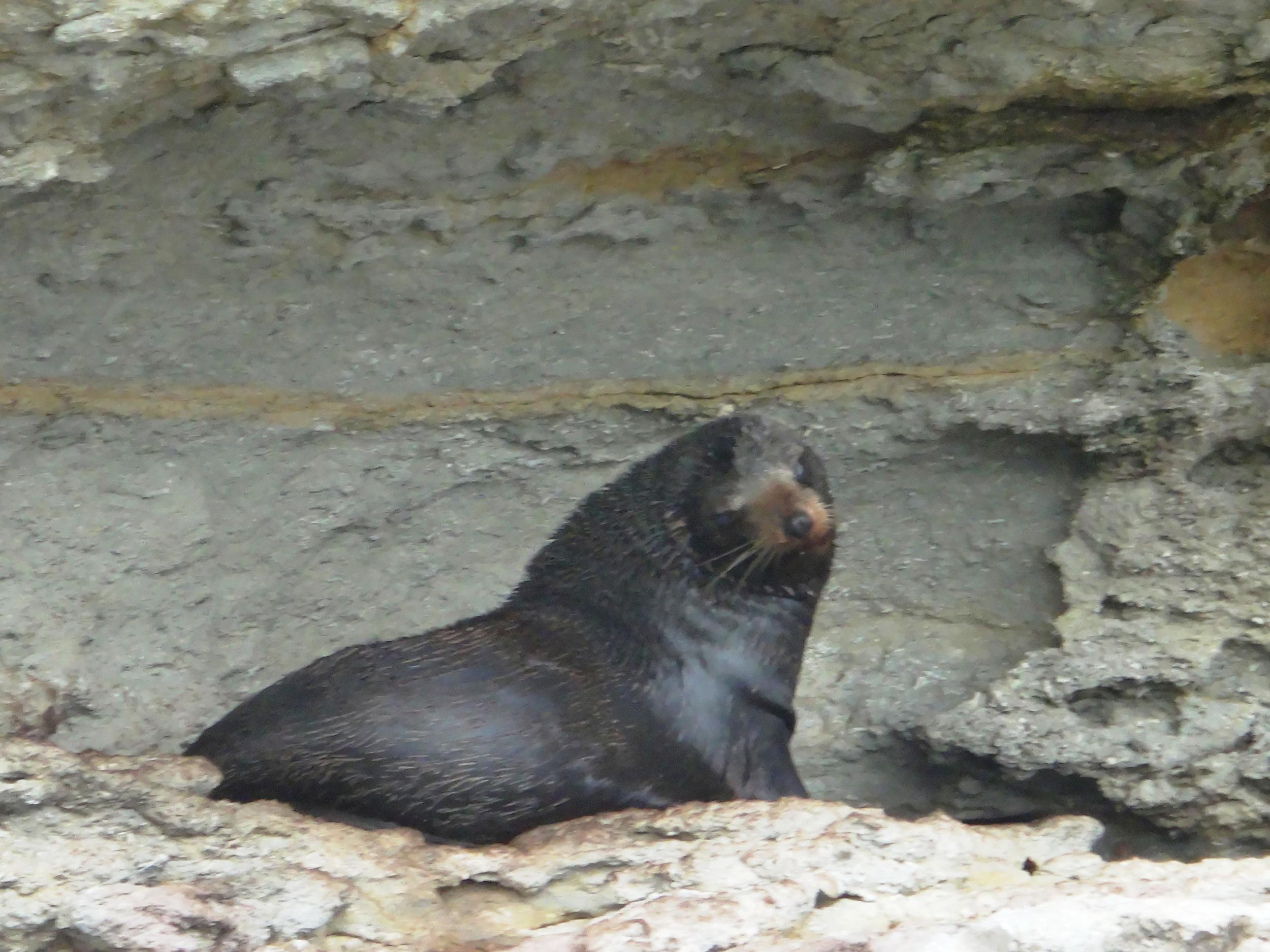 My seal mate.