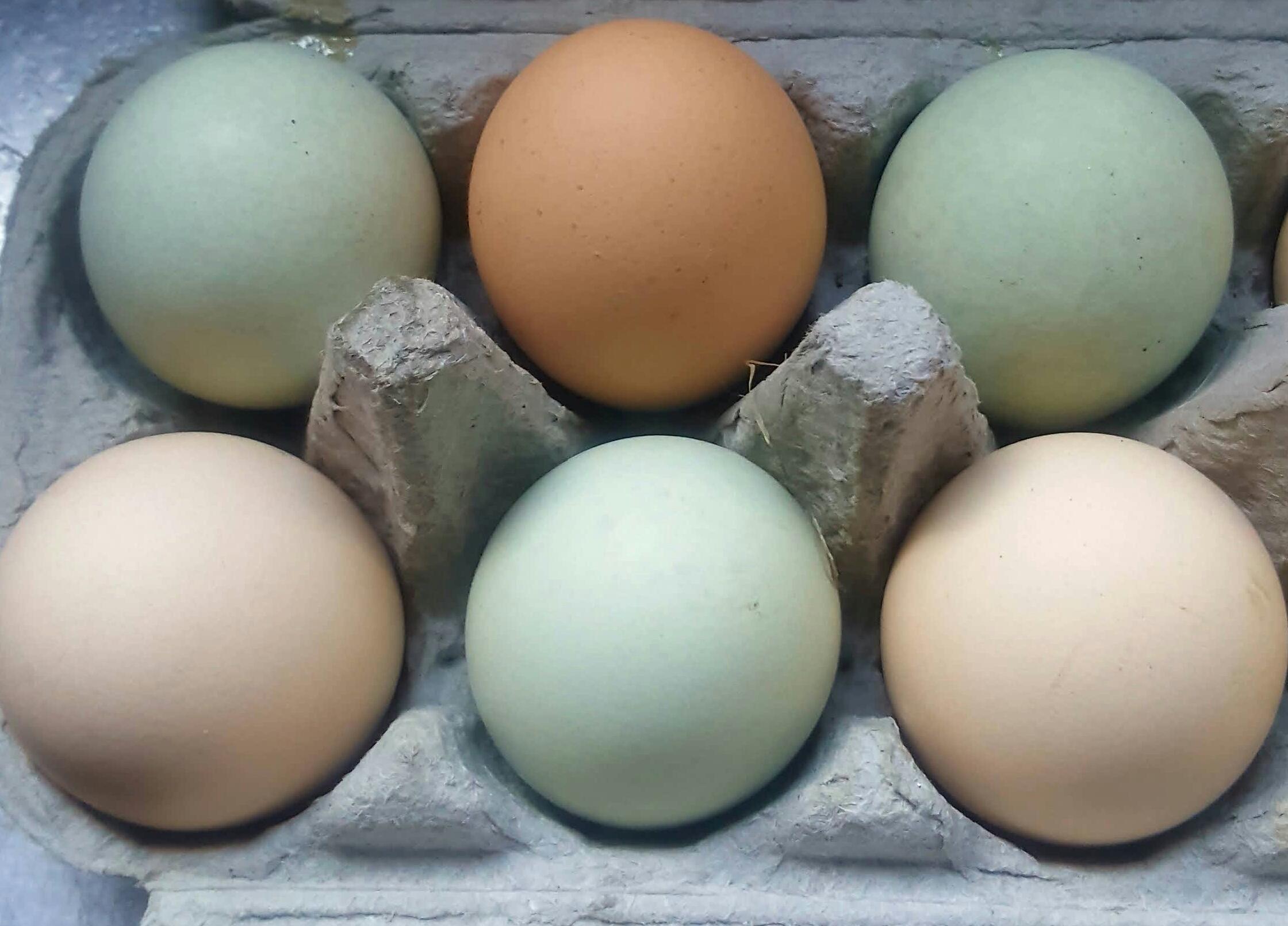My blue chicken eggs.