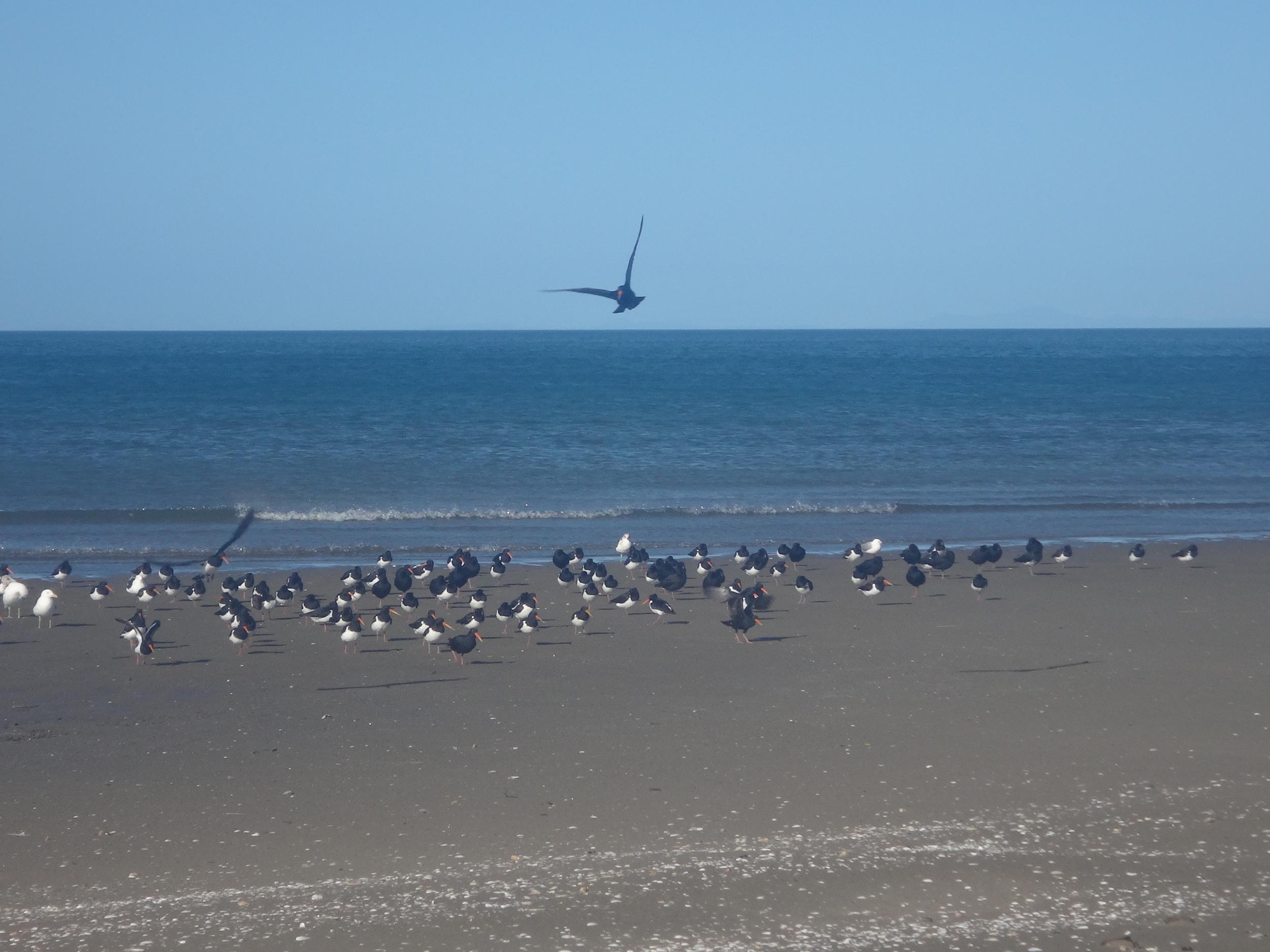 Pakawau Beach.
