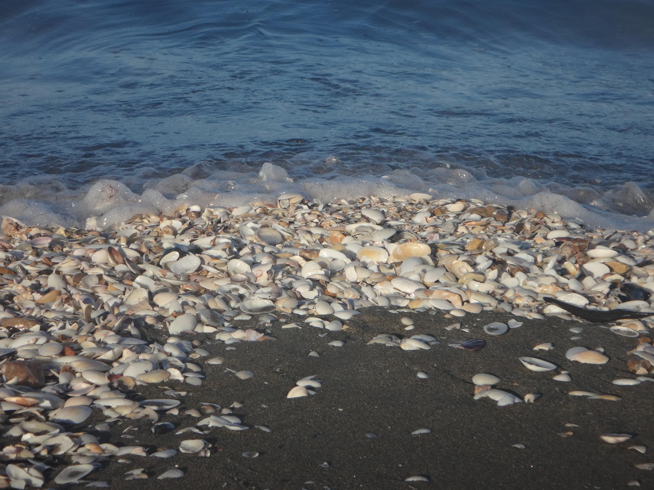 Seashells everywhere.