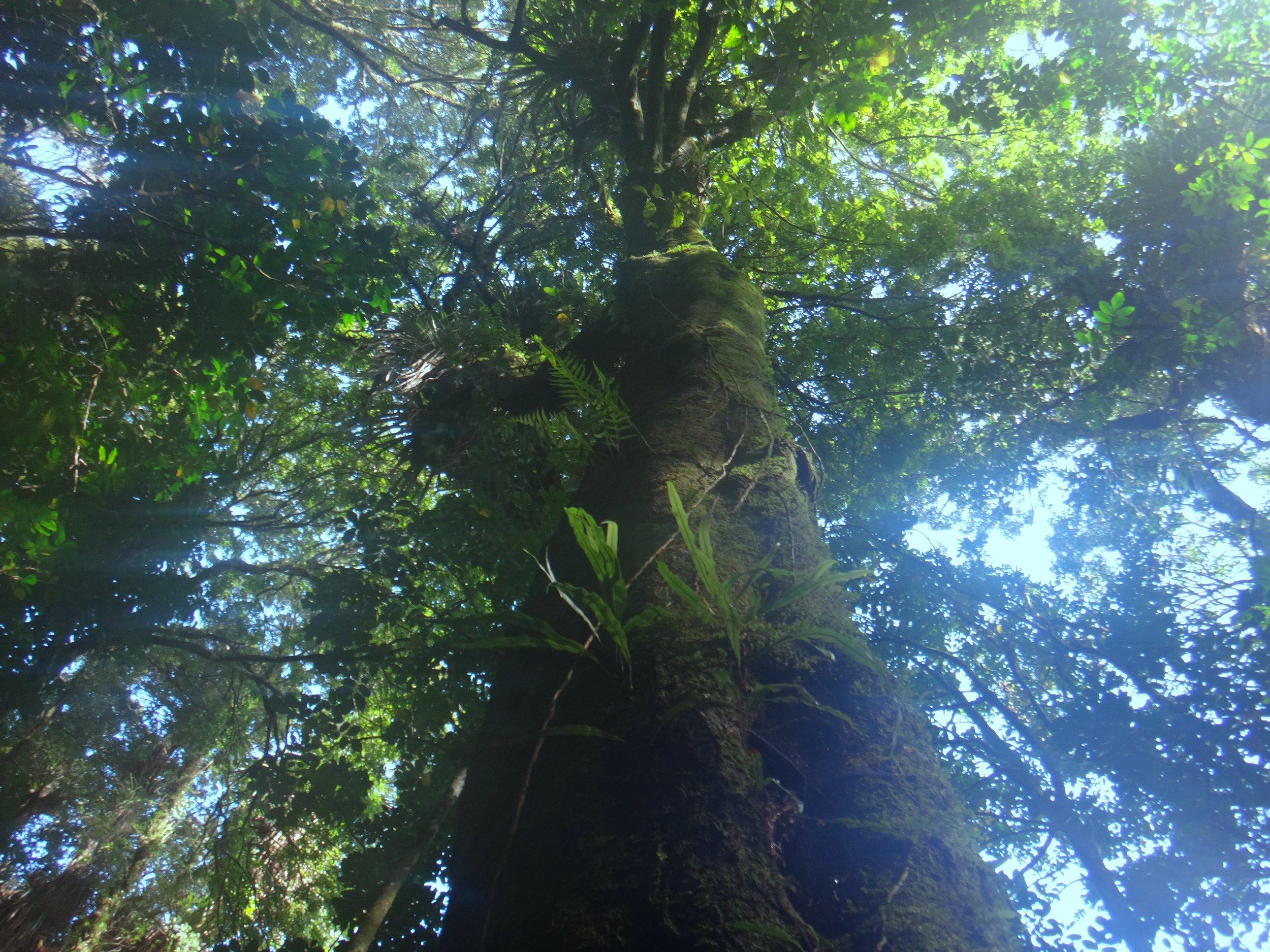 Huge, beautiful and calming trees.
