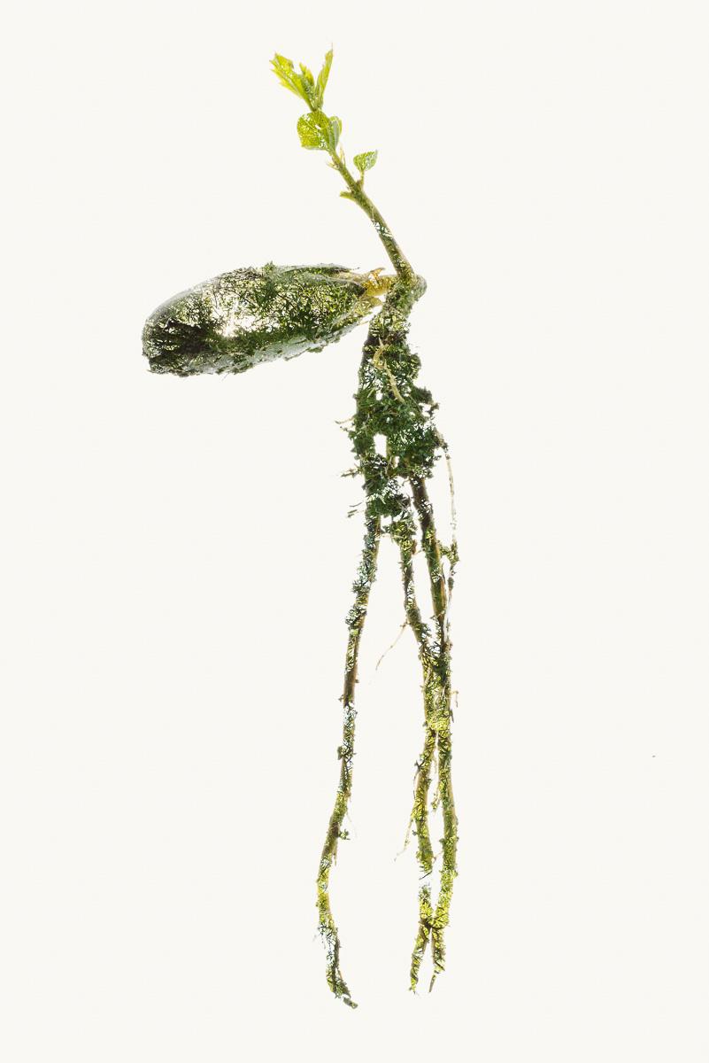 Cork-Tree-From-Seed-to-Life-II.jpg