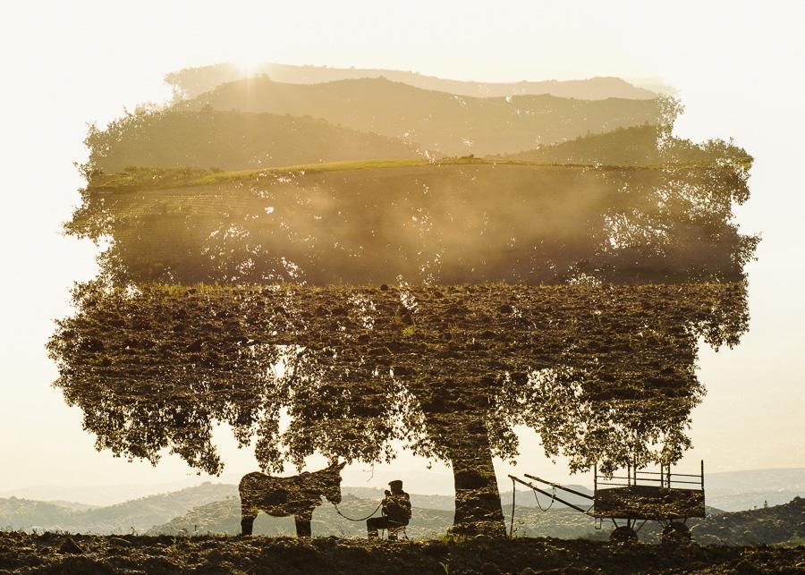 Miranda-Donkey-Farmer-Resting-Under-a-Cork-Tree.jpg