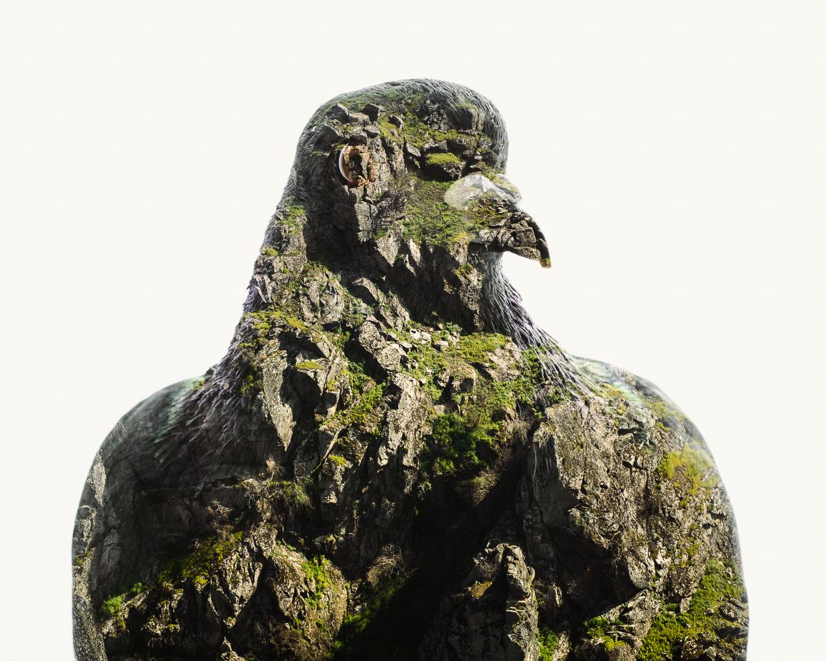 Rock-Pigeon-Douro-Cliffs-III.jpg