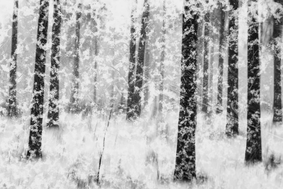 snowstorm-in-dragsvik.jpg