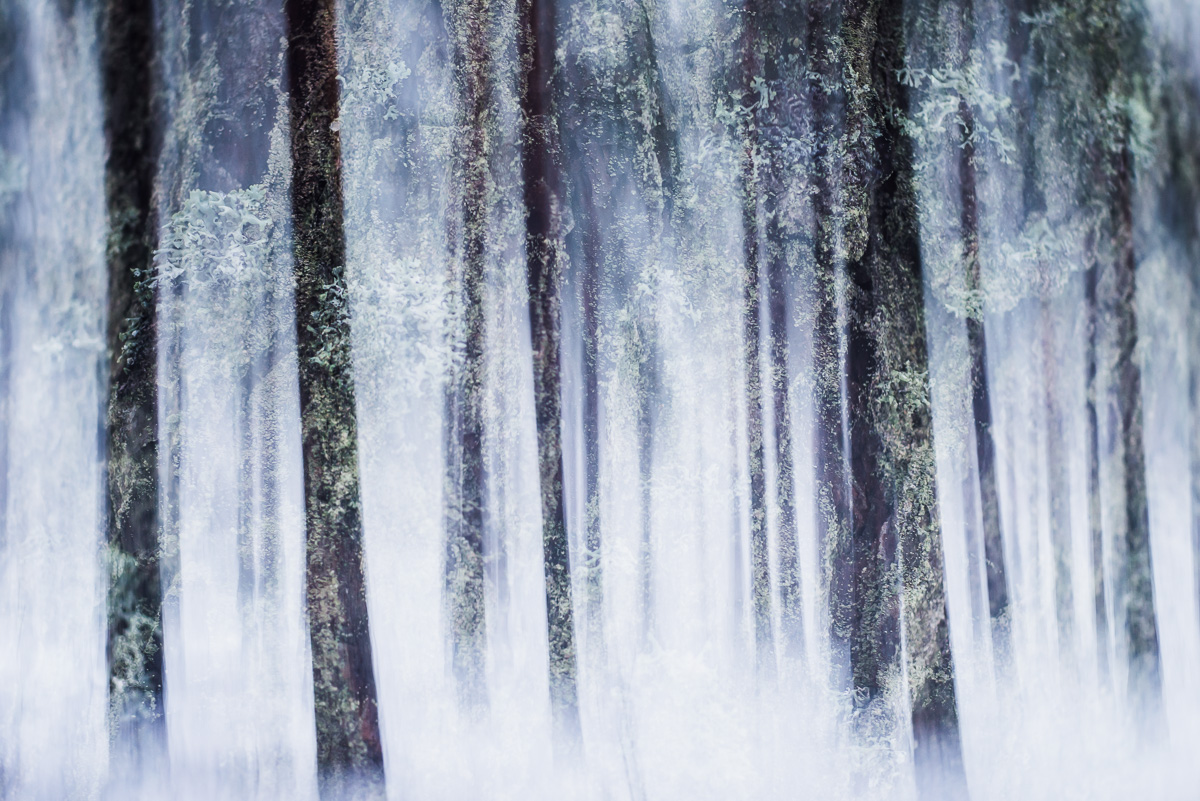 winter-vegetation-II.jpg