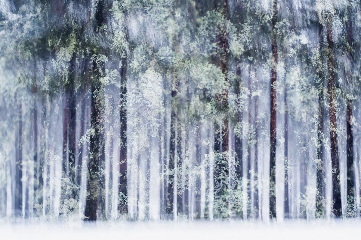 winter-vegetation-IV.jpg