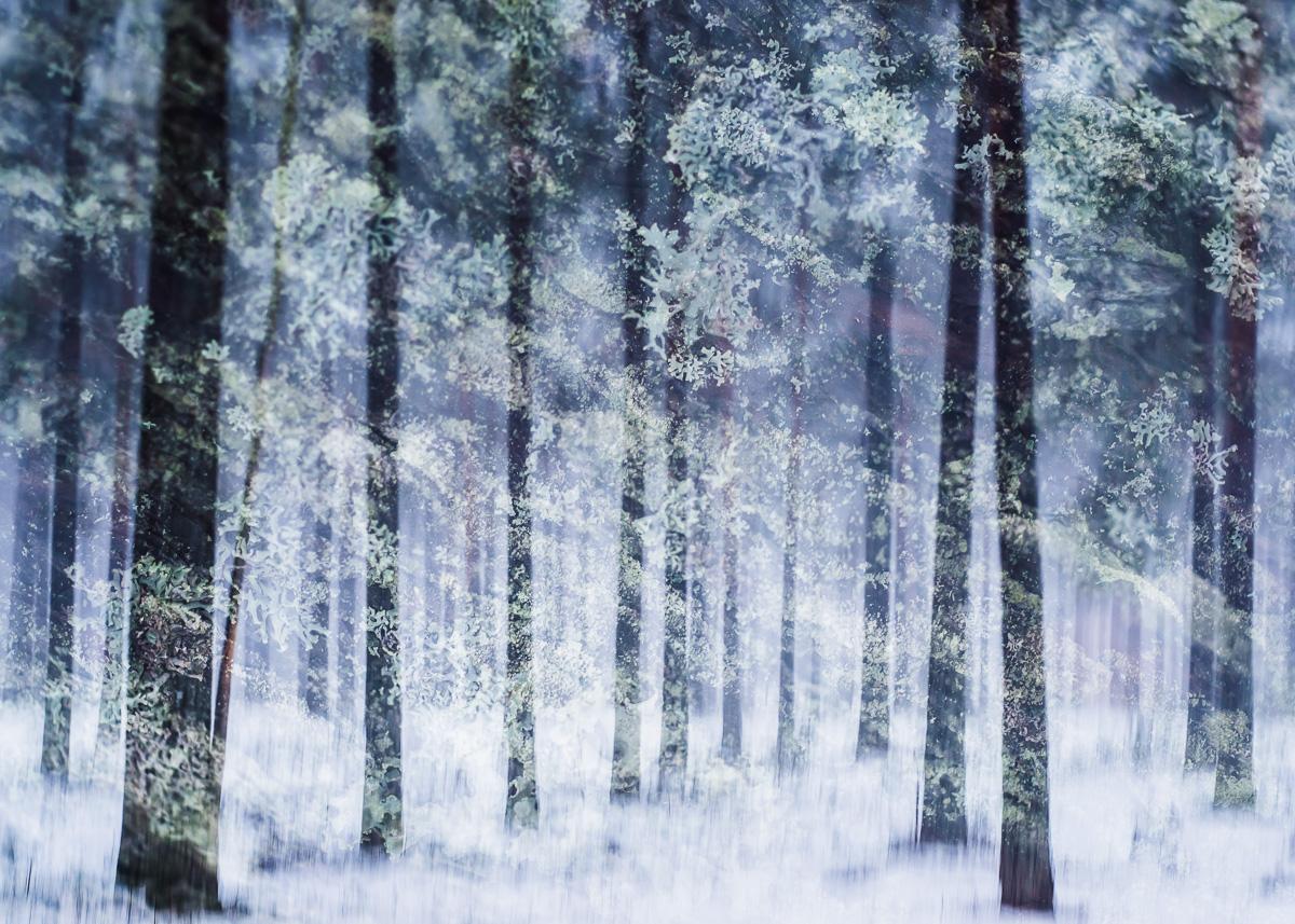 winter-vegetation.jpg