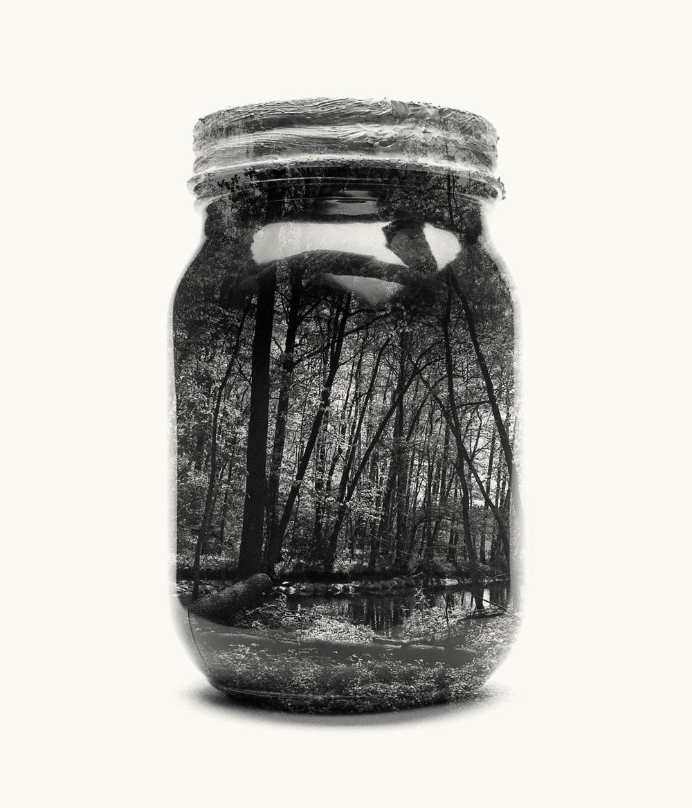 jarred-forest.jpg