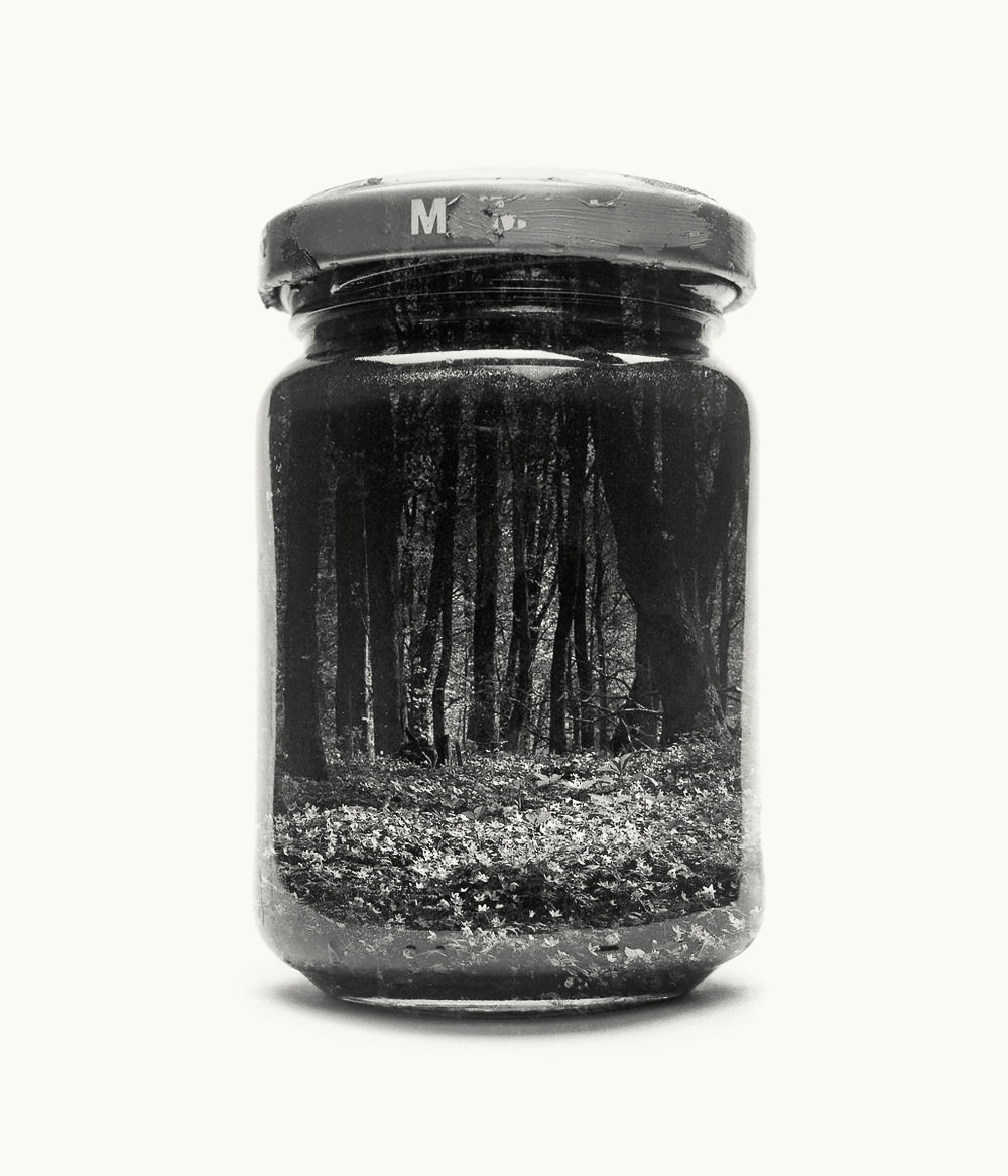 jarred-wood-anemones-II.jpg