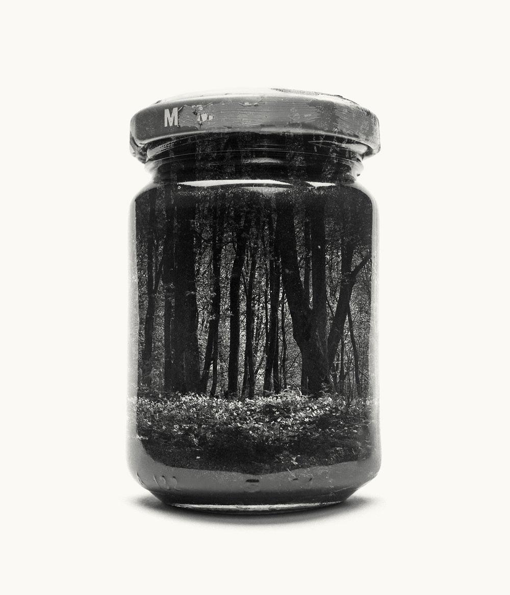 jarred-wood-anemones.jpg
