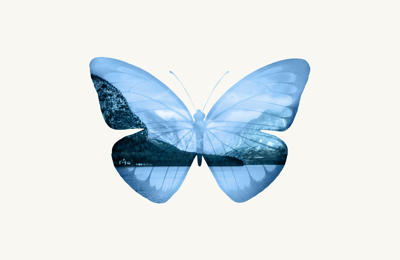 butterfly-visual.jpg