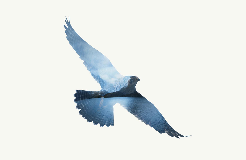 falcon-visual.jpg