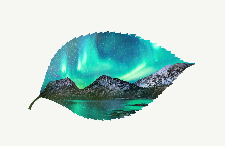 leaf-visual.jpg