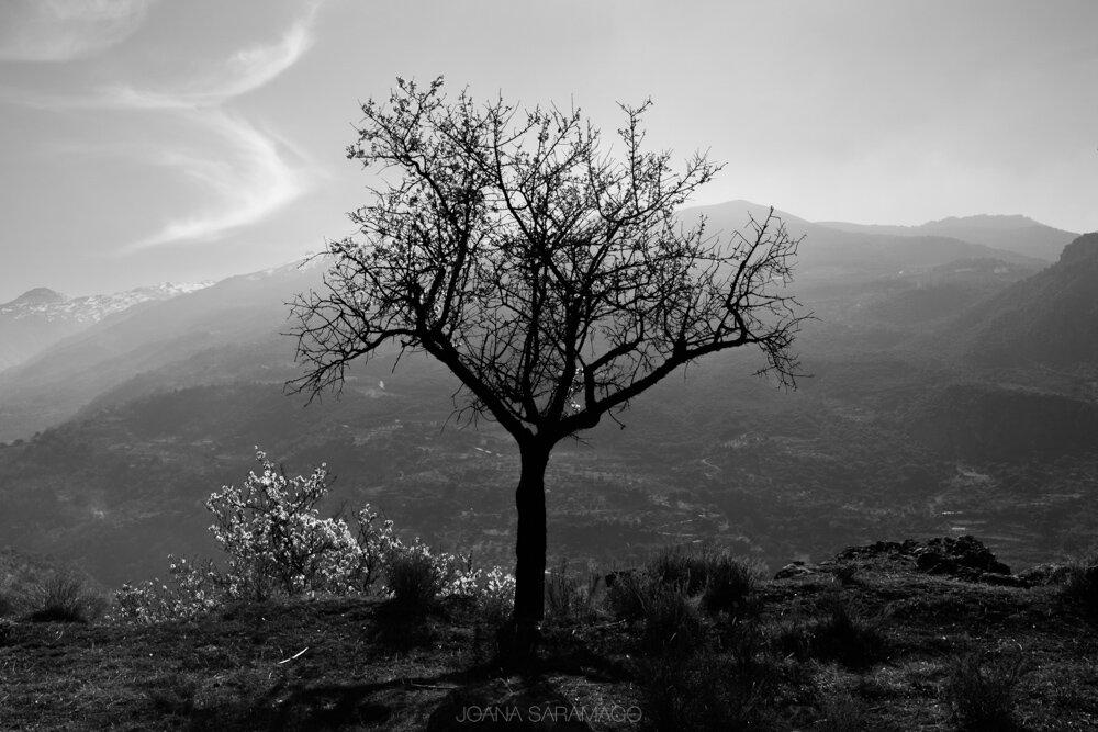 Sierra Nevada_JSR_HR-1_web.jpg
