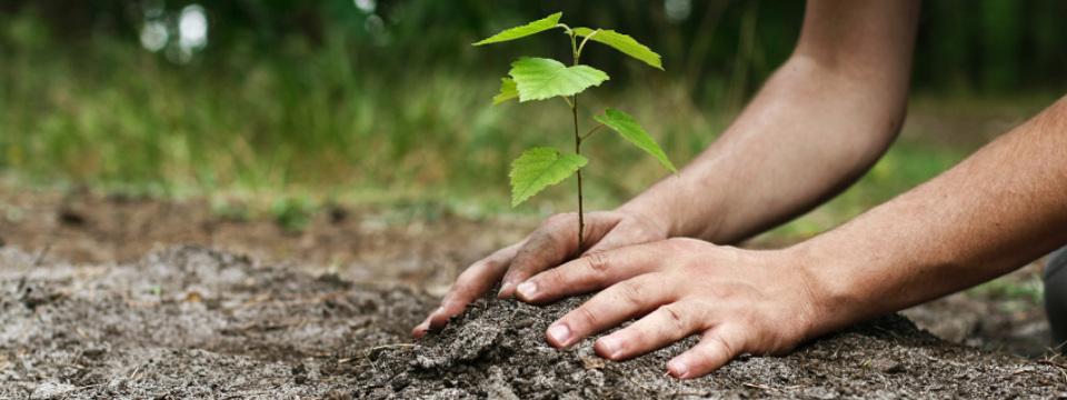 arbre-laval-plantation-arbre-laval-planter-un-arbre.jpg