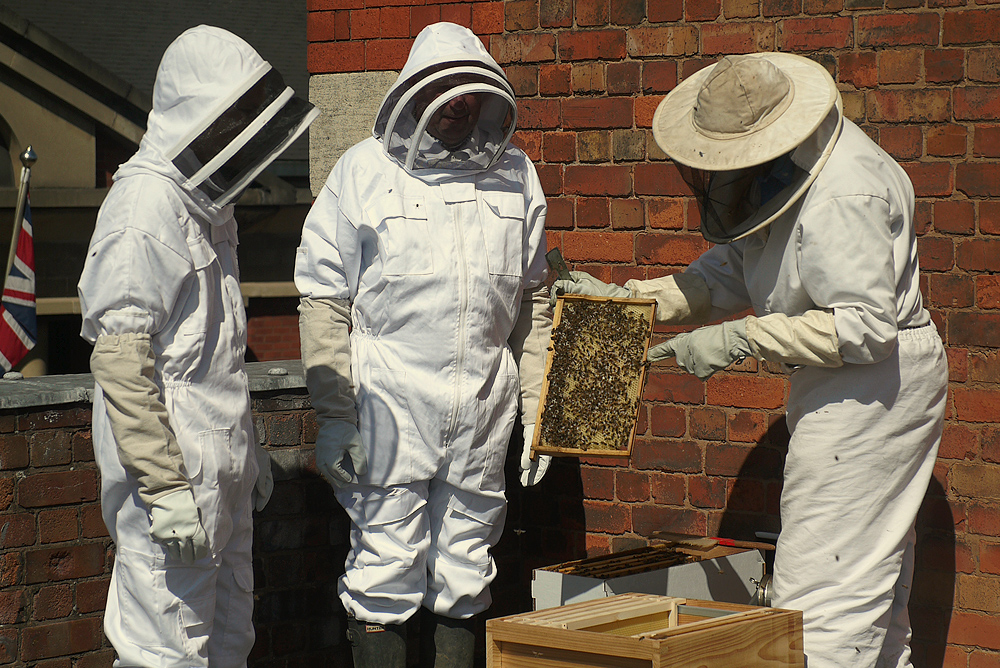 Hive+Society_The Beekeepers Inspect.jpg