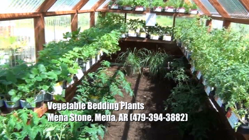 Plant Nursery - Vegetable Bedding Plants & Mulch