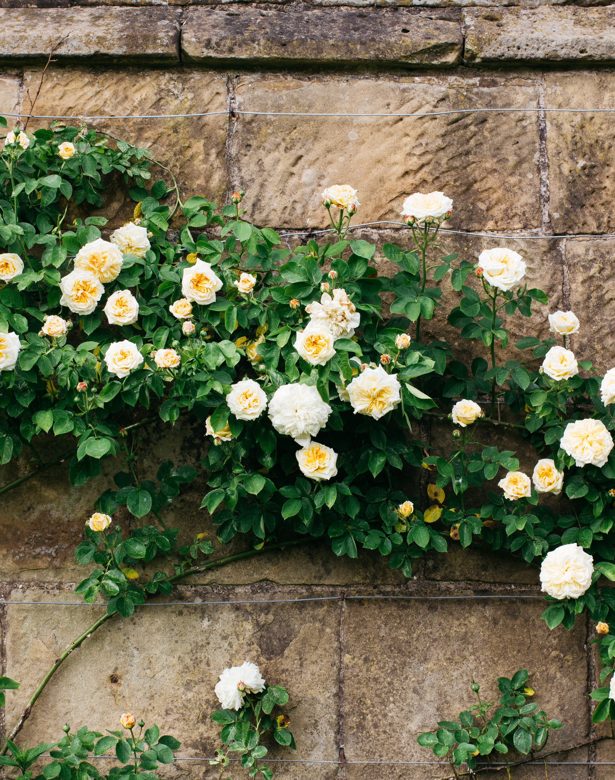 From-Roses---Wall.png