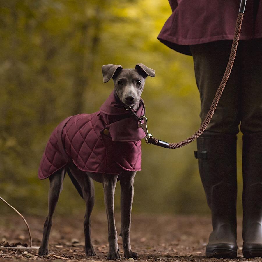 Dorset-whippet-coat-plum-1-1.jpg