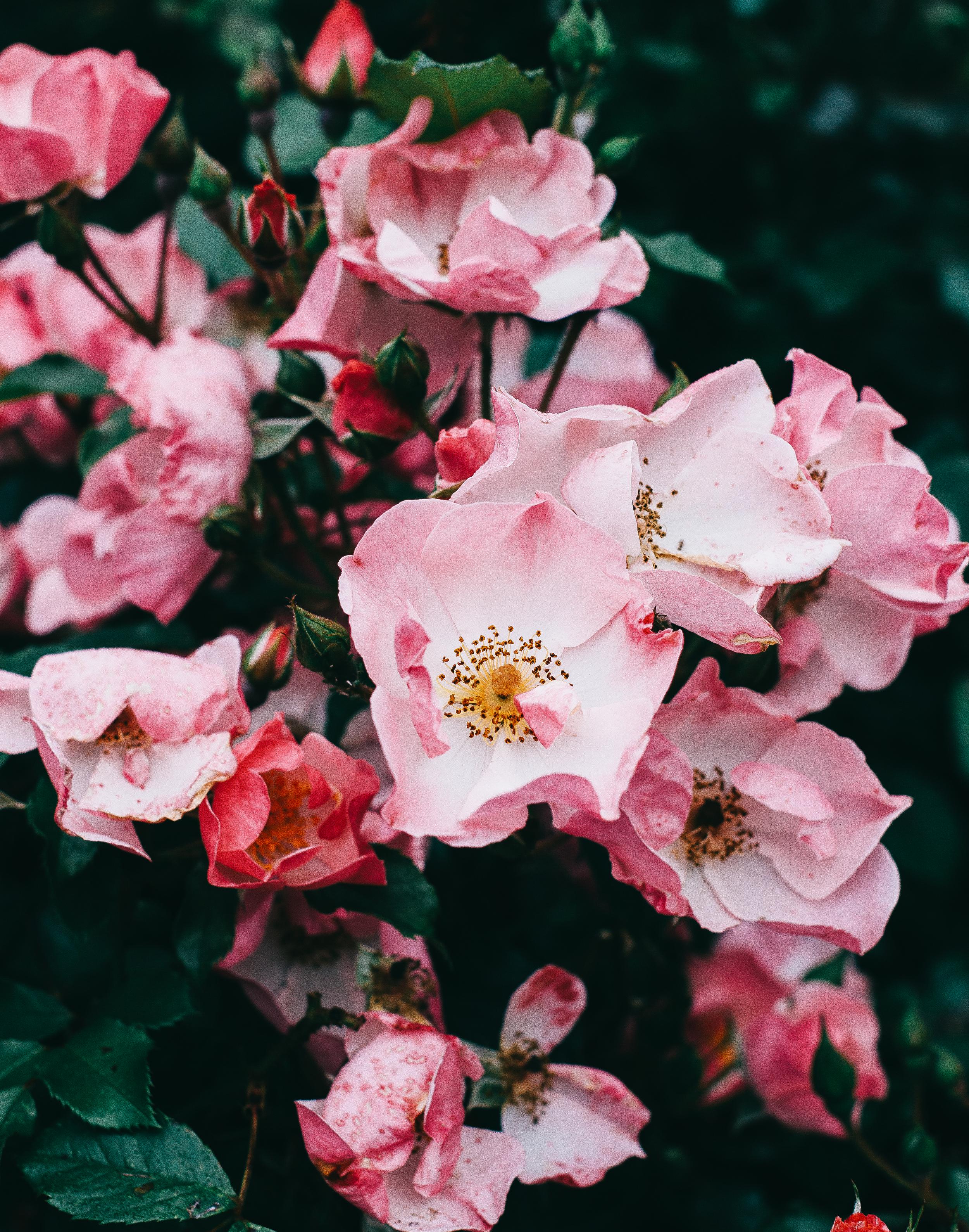 Wallflower-blogger-4.png