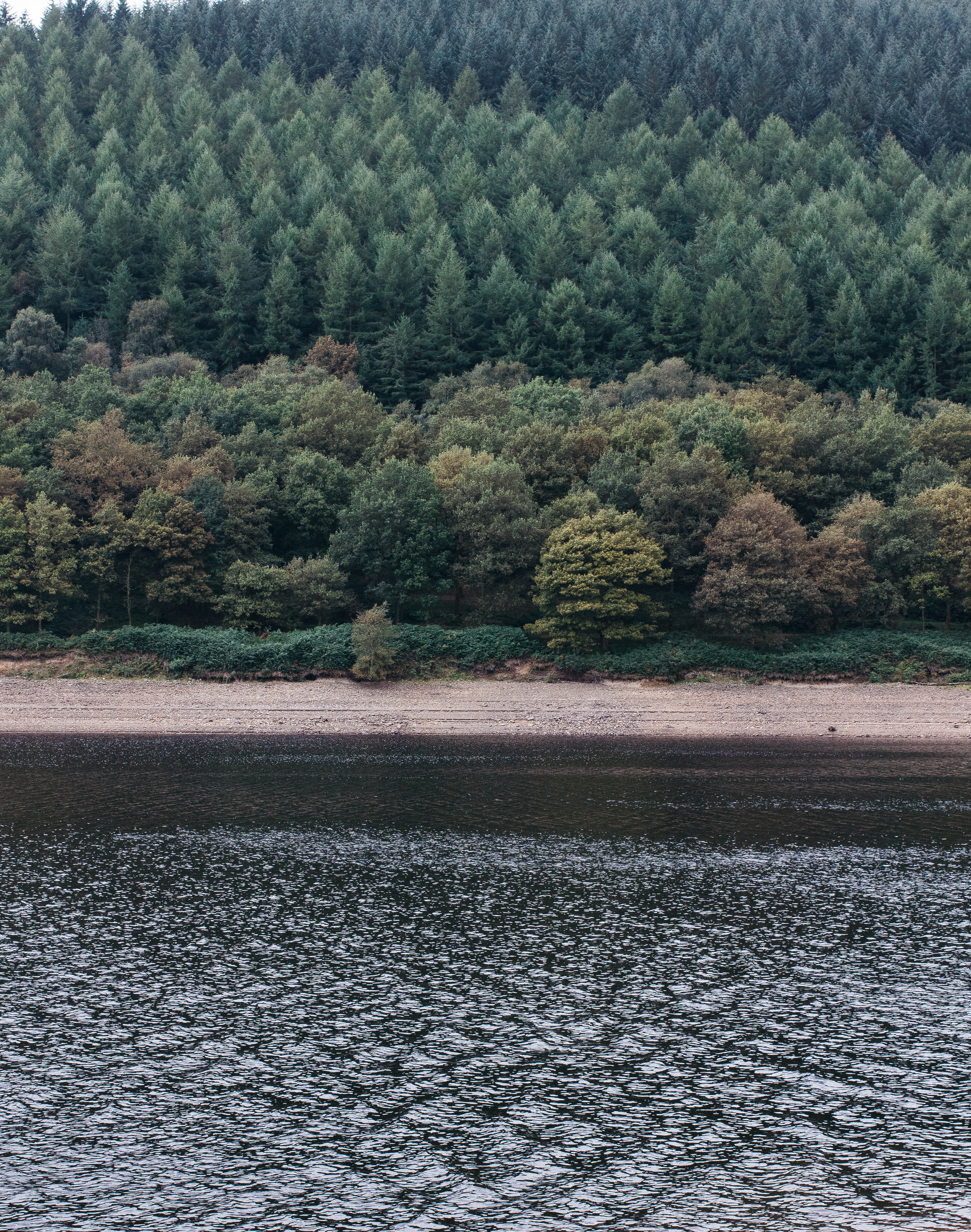 From-Roses---Ladybower-2.png