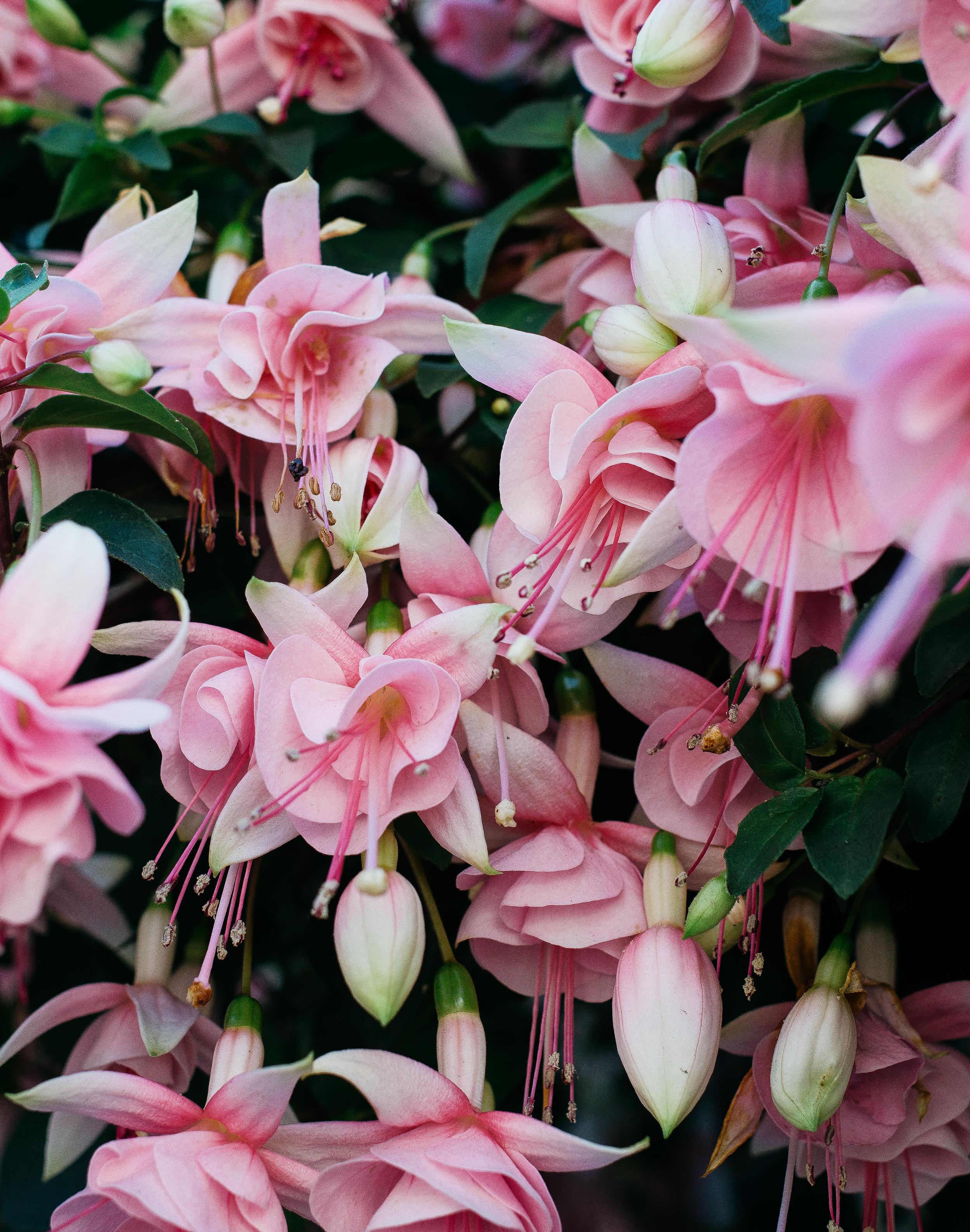 Florals-1.png