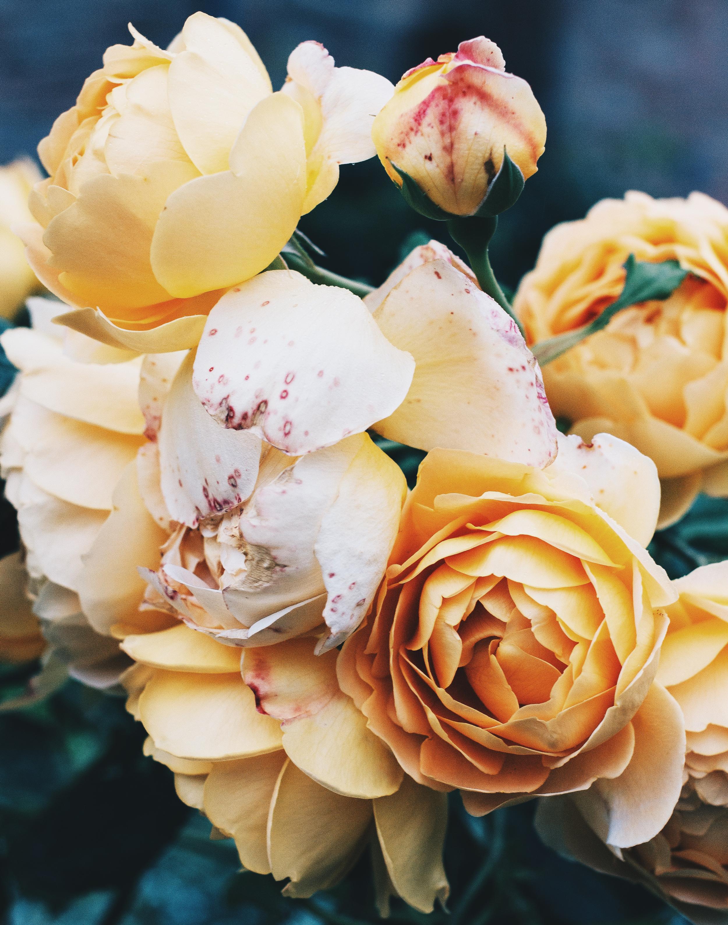 Florals-4.png