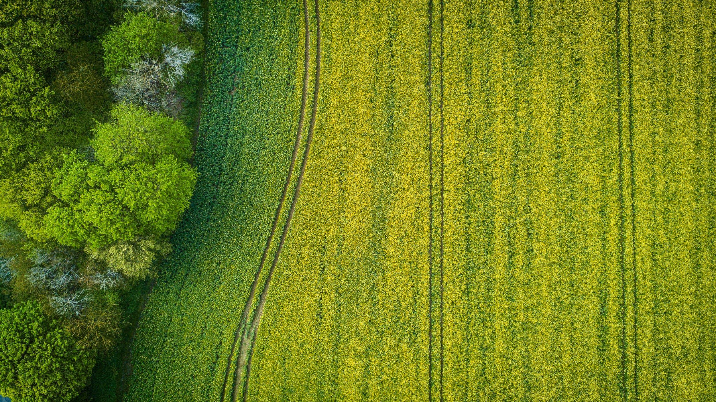 SatelliteImage2.jpg