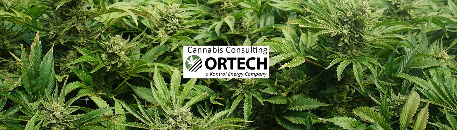 Cannabis - Header.jpg