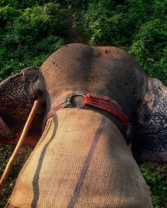 Into the jungle once more. #elephants