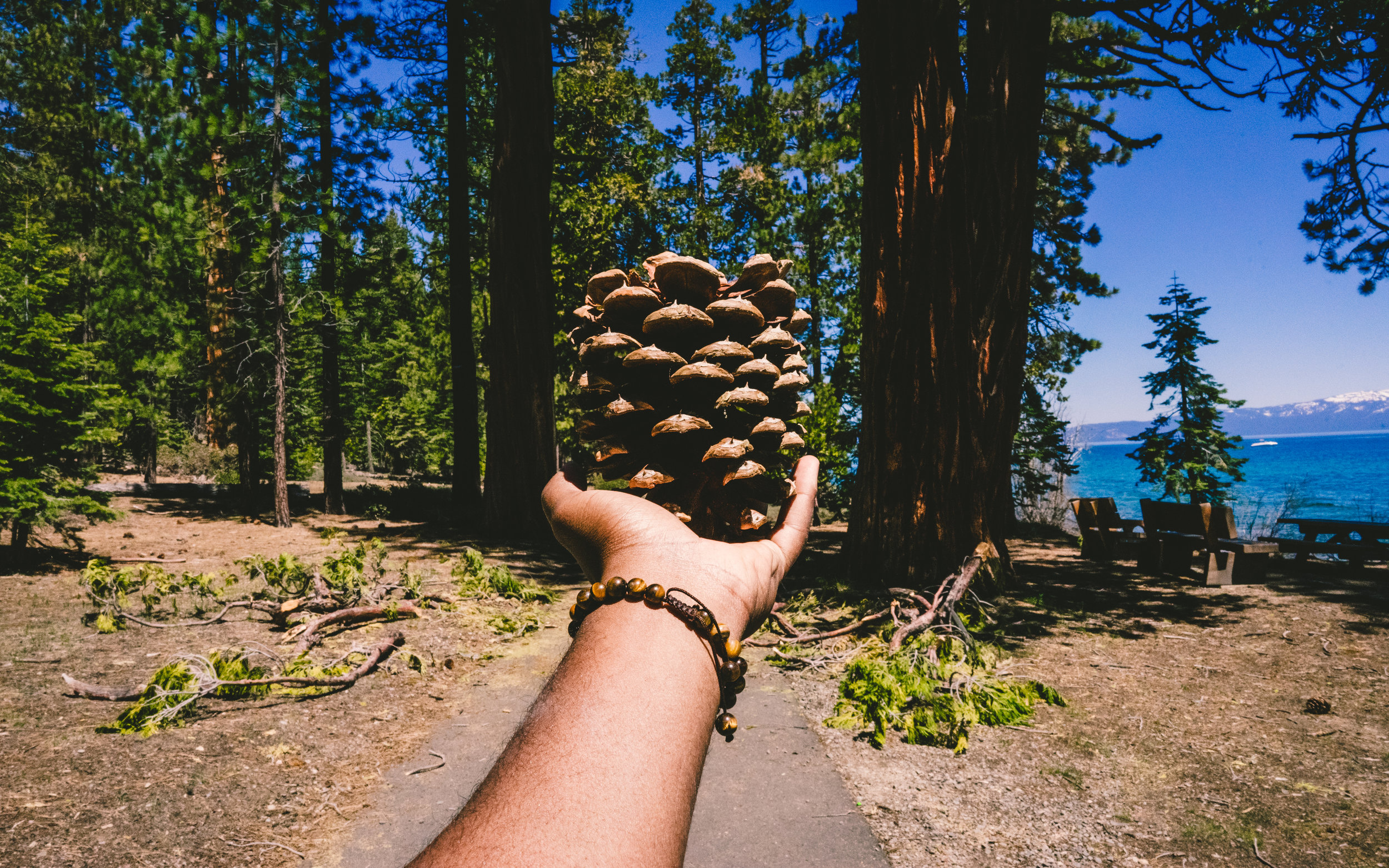 These type of shots always look so cool when I see it on IG. Oh well. P.S. this exact pine cone is in my living room right now.