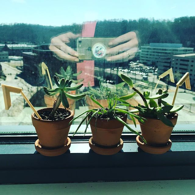 Succulents from Wellness Week love this window!
