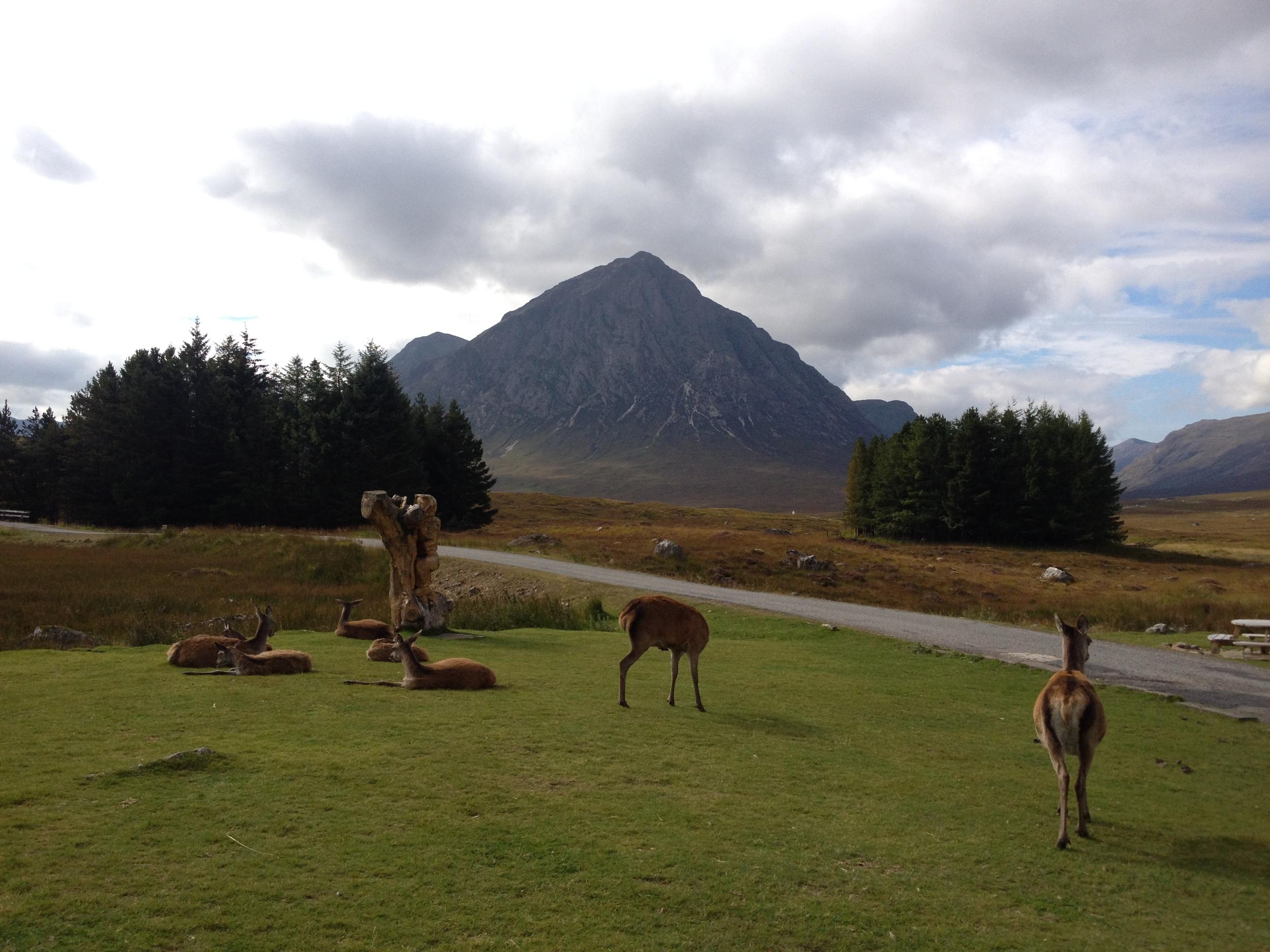 deer-at-kingshouse-glencoe