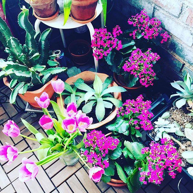 My garden #garden #gardening #flower #flowers #flowerporn #flowermagic #flowerpower #flowerslovers #flowerstagram #floweroftheday #flowerstalking #flowerstyles_gf