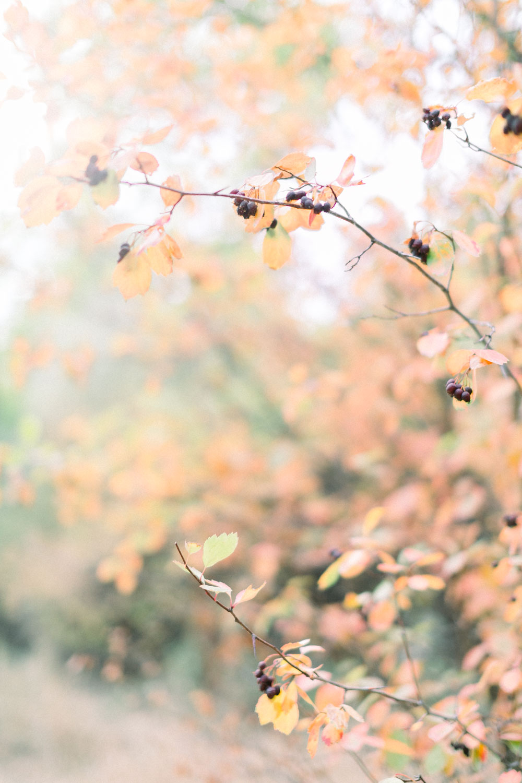 boise idaho photographer-0381.jpg