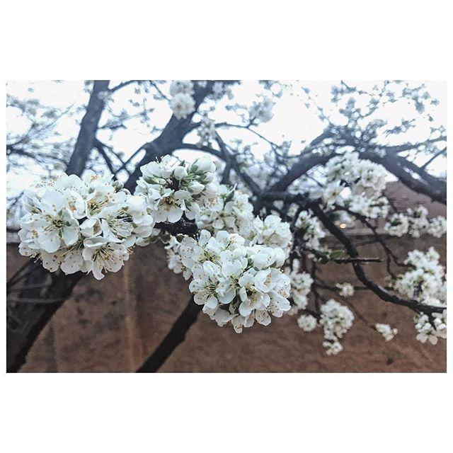 Plum blossoms. Spring. ✨