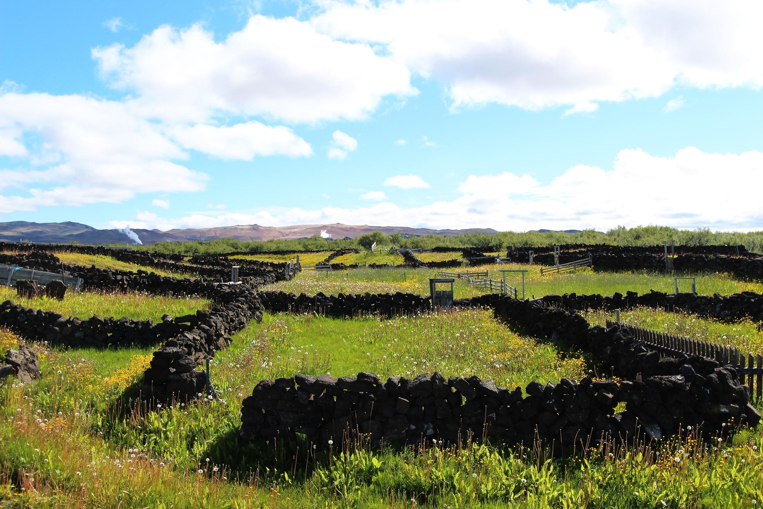 Mývatn Landscapes