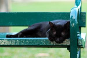 cat-sleeping-200-300