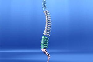 spine-anatomy-200-300