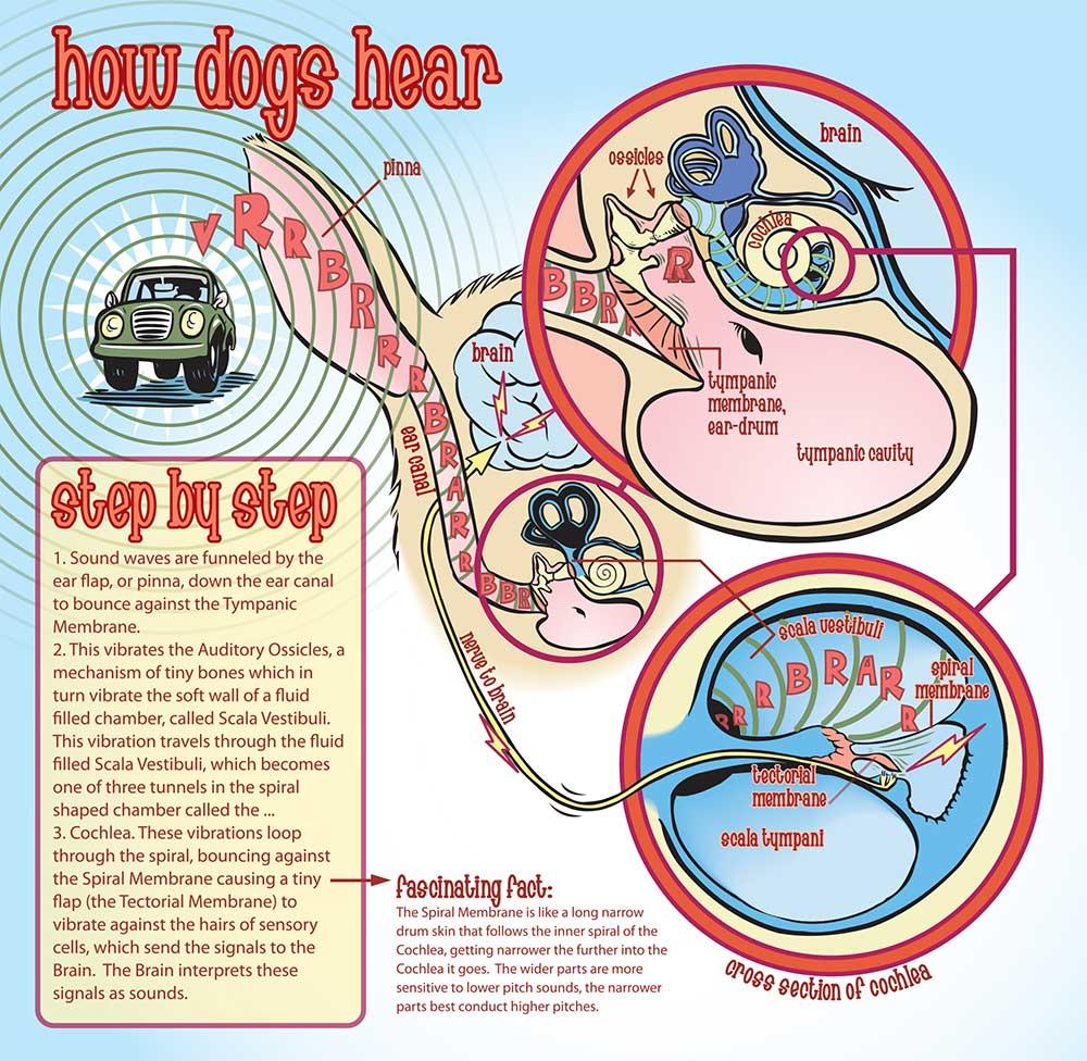 Dogs+Hearing.jpg