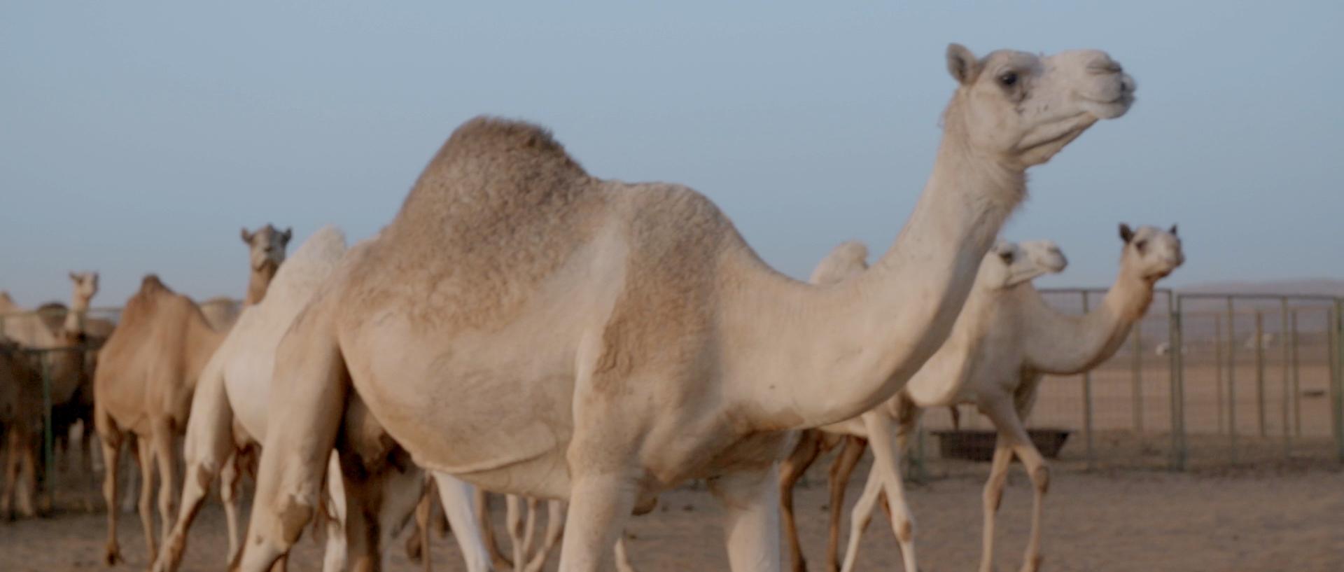 Sara al arab land rover_1.43.2.jpg