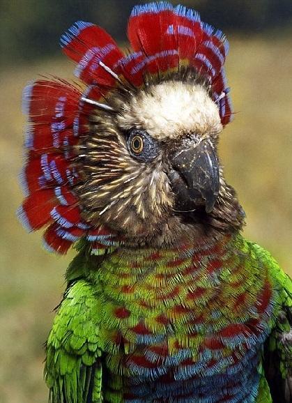 Hawkhead.jpg