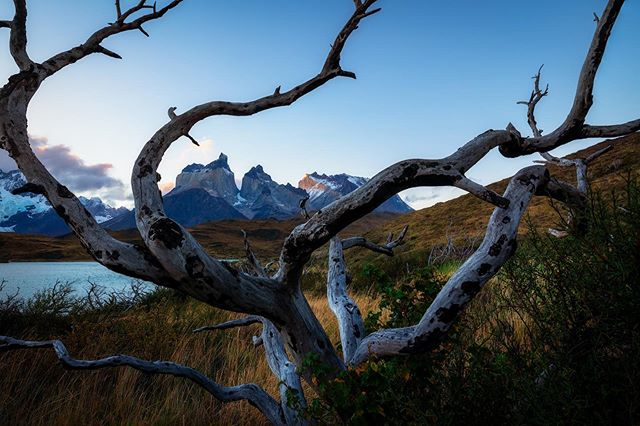The gnarled dead forests of Patagonia are just as interesting as those with life and color. #D850 #patagonia #torresdelpainenationalpark #patagoniachile #torresdelpaine • • • • •  #pocket_world #ig_landscape  #dream_spots #visual_heaven #landscapephoto #landscape_lover #natgeoadventure #earthexperience #mthrworld #majestic_earth  #igworldglobal #ilovenature #ig_divineshots #EarthOfficial  #earth_shotz #marvelshots #theworldshotz #discoverglobe #landscapelover #landscapehunter