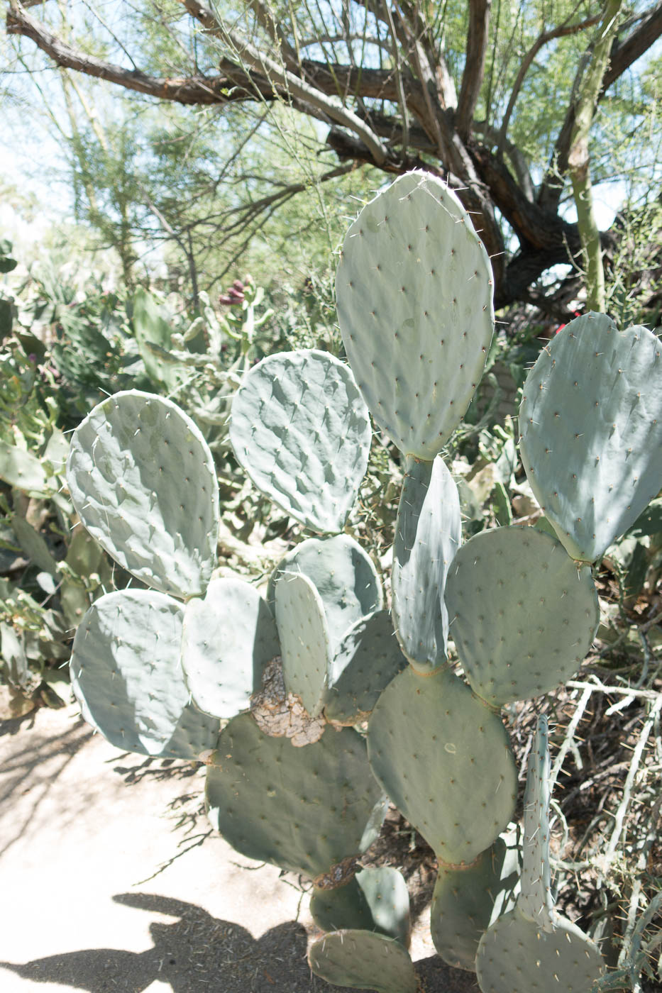 Cactus plant at Moorten Botanical Garden | The Chic Diary.jpg