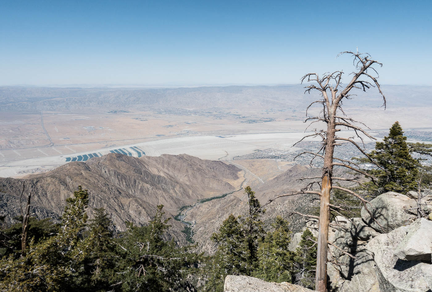 Palm Springs Aerial Tram View at the Top | The Chic Diary.jpg