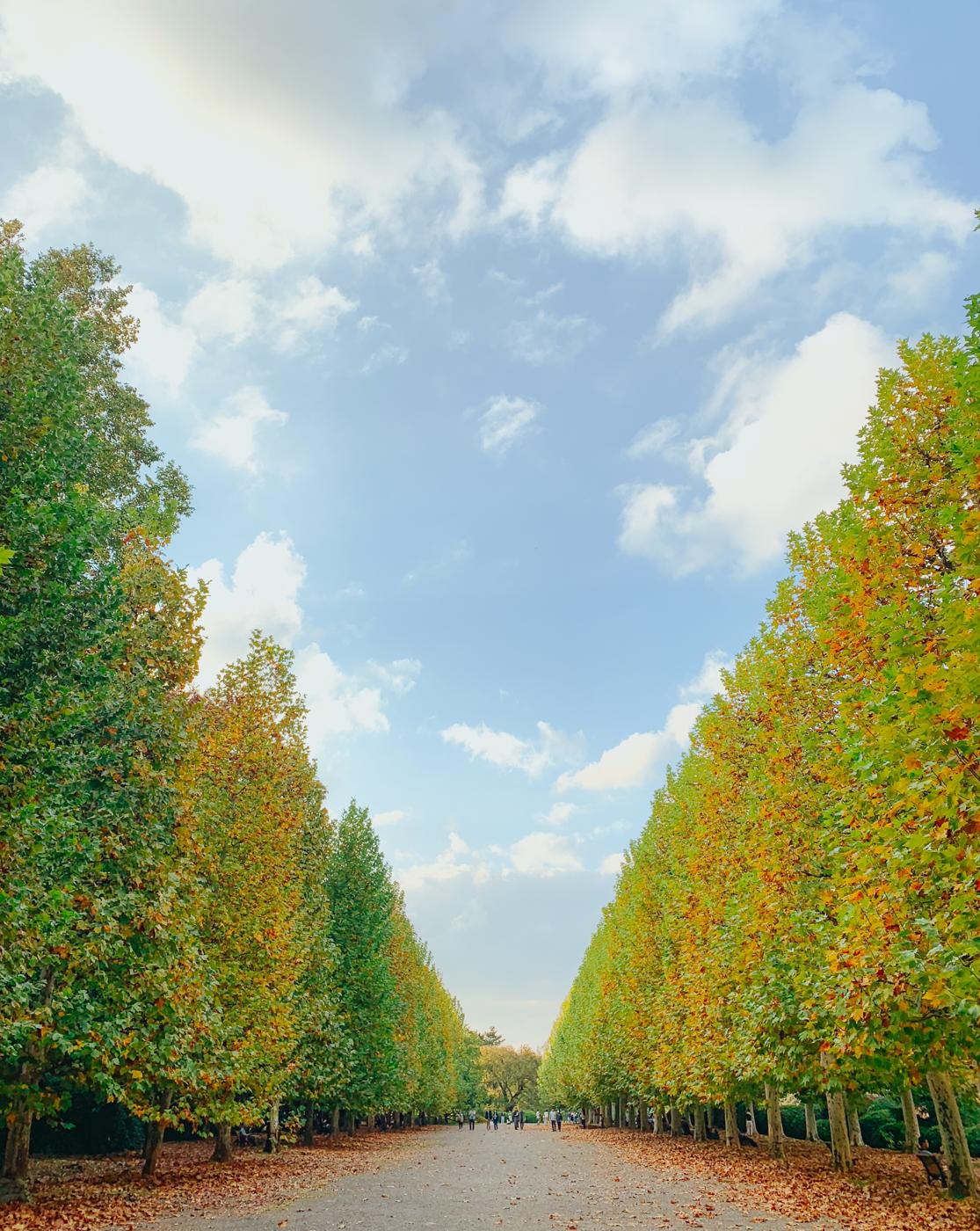 Shinjuku Gyoen National Garden | Tokyo, Japan Travel Guide | The Chic Diary