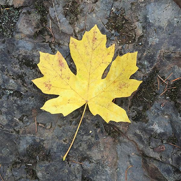 Leaf-site.jpg